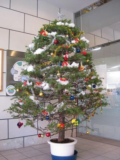 本物の木に飾り付けたクリスマスツリーの写真